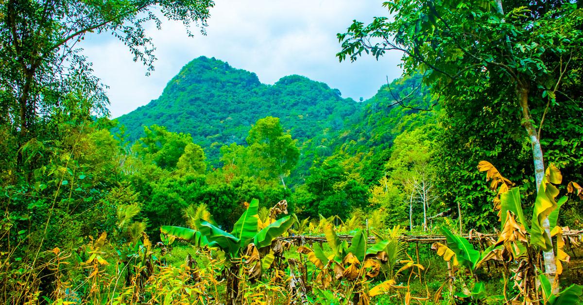 Photo des paysages dans la forêt de Cat Ba